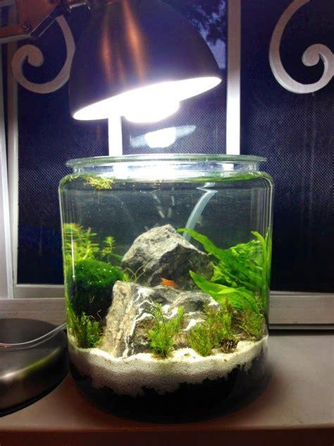 tech  gallon shrimp jar  planted tank forum