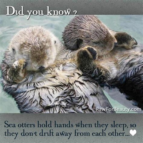 Otter Love Meme - funny animal memes part 5