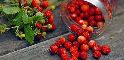 gotta alimentazione consigliata fragoline di bosco