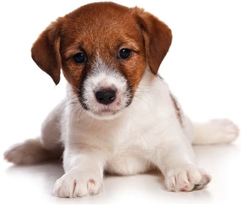 puppy tips for the week proven tips for successful puppy house petful