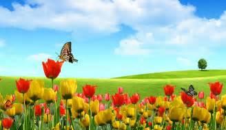 como decorar jardines con plantas que atraen mariposas