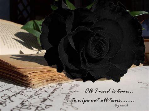 wallpaper flower black rose black rose wallpapers wallpaper cave