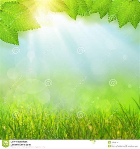 imagenes verdes para facebook fondos naturales verdes stock de ilustraci 243 n imagen de