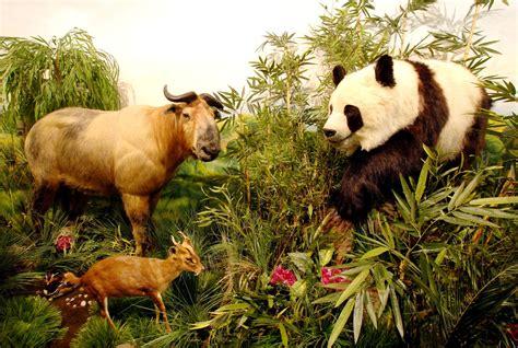 la fauna pictures fauna ne demektir faunanın anlamı