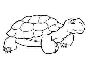 Turtle Shell Template by Turtle Shell Template Clipart Best