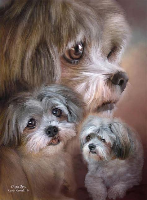 lhasa apso shih tzu mix temperament best 25 lhasa apso ideas on lhasa apso puppies shih tzu and shih tzu puppy