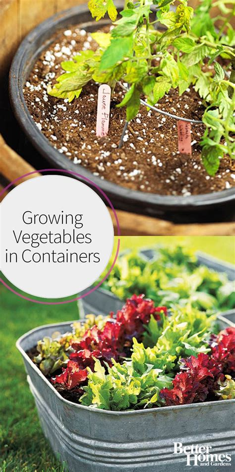 see how you can grow amazing vegetables in raised garden 1000 images about grow your own produce on pinterest