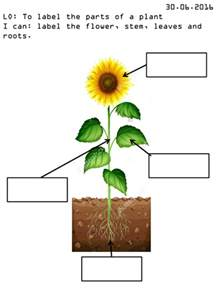 Diagram Of A Flower With Labels - label the parts of a plant by amywarner09 teaching