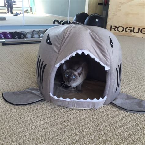 shark bed for cats sara s favourite things
