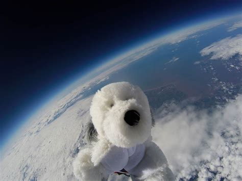 space puppies sam the is missing after being sent to the edge of space nbc news