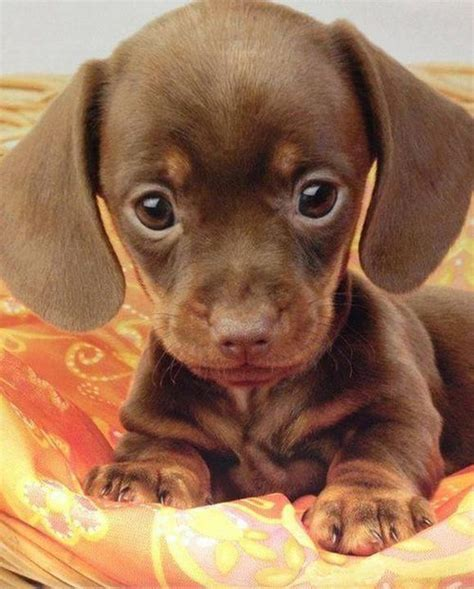 the cutest puppies 16 of the cutest puppies you ll see this week