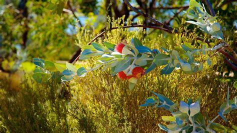 Botanical Gardens Perth Park And Botanic Garden In Perth Western Australia Expedia