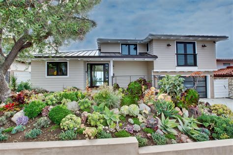 plants that don t need water astonishing drought tolerant yards ideas best