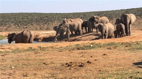 mission elephant rescue mission amazing rescue mission as elephants rescue baby elephant from waterhole storytrender