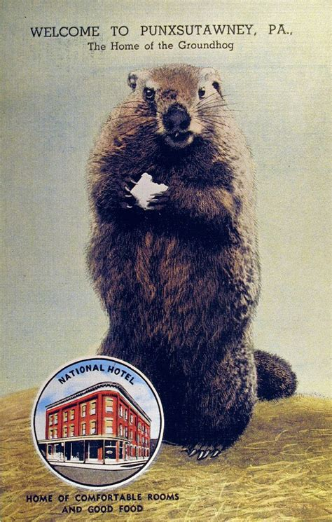 groundhog day in pa 10 best ideas about punxsutawney pa on