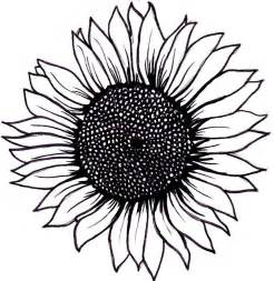 Outline Of Sunflower To Colour by 25 Best Ideas About Sunflower Drawing On Sunflower Tattoos Thigh And