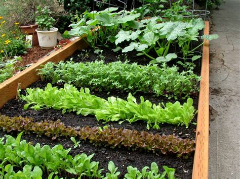 Pics Of Vegetable Gardens Green Thumb Gardening Series Vegetable Gardening