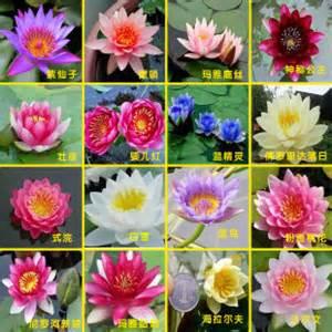 Classification Of Lotus
