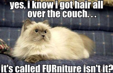 lol couch cat meme furniture