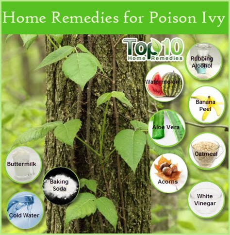 home remedies for poison top 10 home remedies