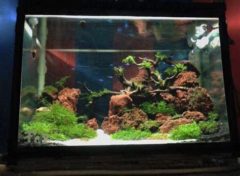 jenis tanaman air penghias aquascape  aquarium