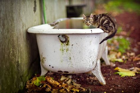 cat bathtub bathtub cat ponta delgada portugal travellerspoint travel photography