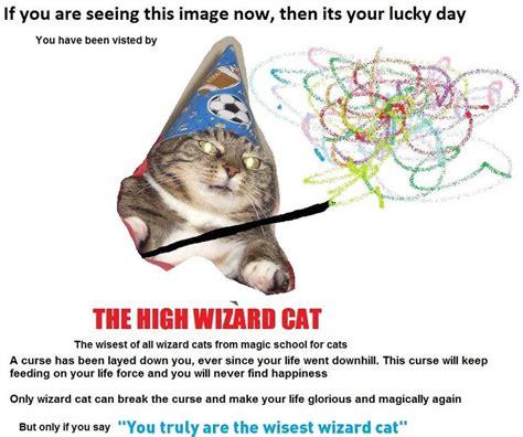 wizard cat high wizard cat wizard cat вжух your meme
