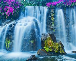 Beautiful Waterfalls With Flowers by Crown Of Flowers On Beautiful Waterfalls
