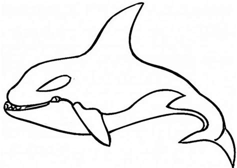 shamu coloring pages www imgkid com the image kid has it