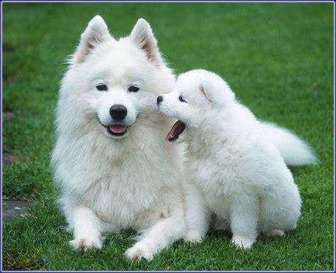 best medium sized family dogs great family dogs medium size pet photos gallery ay3kpywbow