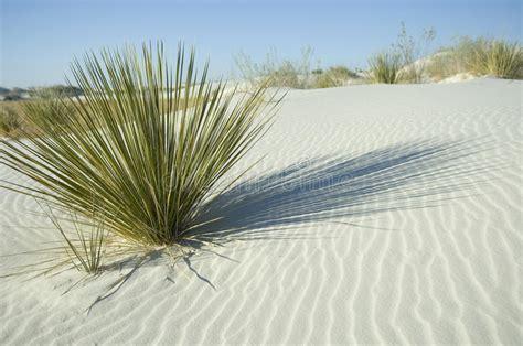 Plante D Extérieur 6307 by Plante Verte En Dune De Blanche Image Stock Image