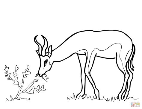 coloring pages springbok springbok from south africa coloring page free printable
