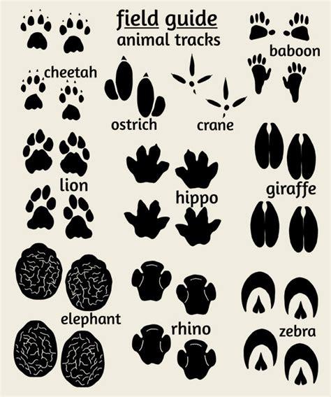 printable animal footprints jungle nursey art field guide animal tracks