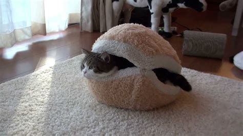 hamburger cat bed マカロンなベッドとねこ macaron bed and maru hana youtube