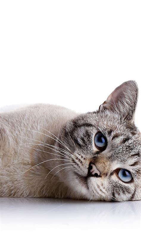 wallpaper cat cute animals  animals