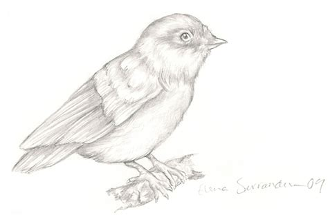 bird art drawing birds bird drawing by eleihna on
