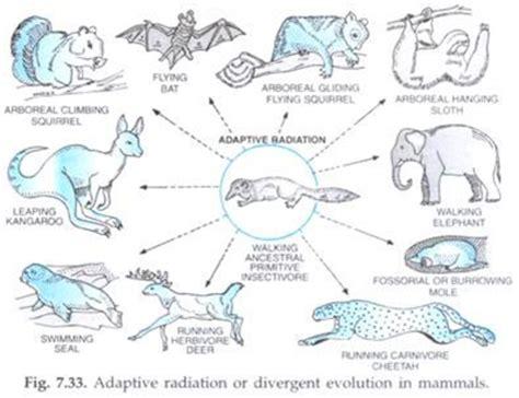 adaptive radiation diagram adaptive radiation www pixshark images galleries