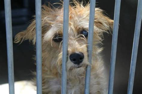 orange county pound oc supes ripped again for bad treatment of animals for the curious