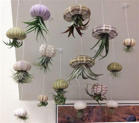 creative air plant decor  air plant