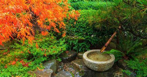 japanse tuin planten kopen japanse planten musa basjoo japanse vezelbanaan with