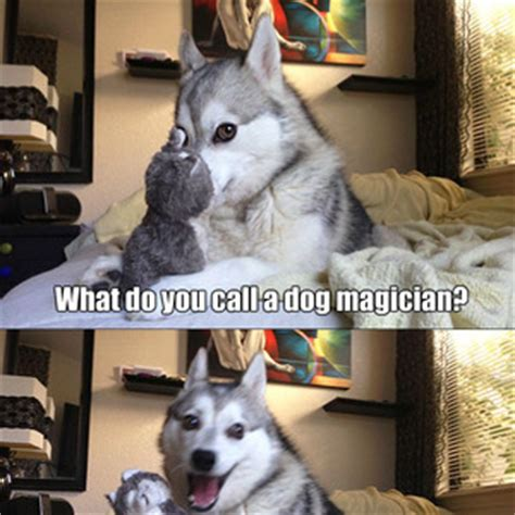 Dog Pun Meme - pun husky memes image memes at relatably com