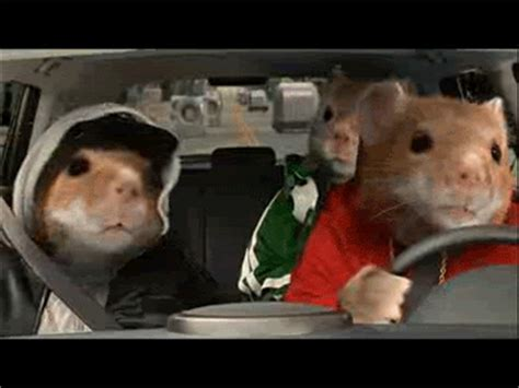 Kia Gerbils How I Feel About Black Friday In Gifs Budgets Are