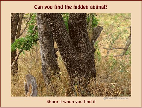 Find Picture Of Picture Riddle How Did It Take You To Find The Animal In This Photo