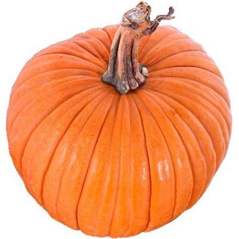 pumpkin meaning of pumpkin in longman dictionary of - Significance Of Pumpkin In