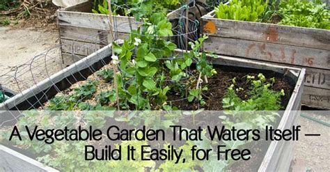 17 Best Images About Urban On Pinterest Keep Calm Self Watering Vegetable Garden