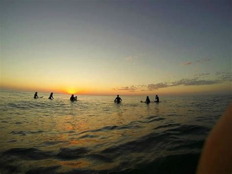 dolphin house noosa surf session picture of dolphins