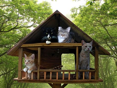 Feral Cat House by 27 Best Images About Feral Cats On Cats