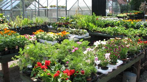 chestnut nurseries garden centres in coventry nursery