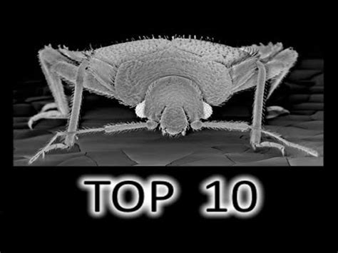 do bed bugs run fast what do bed bugs look like and how to get rid of bed bugs