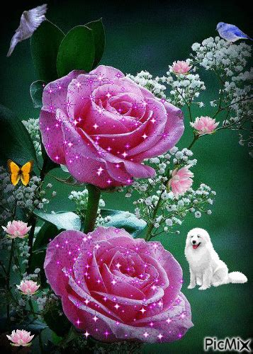 imagenes bonitas mix rosas bellas picmix